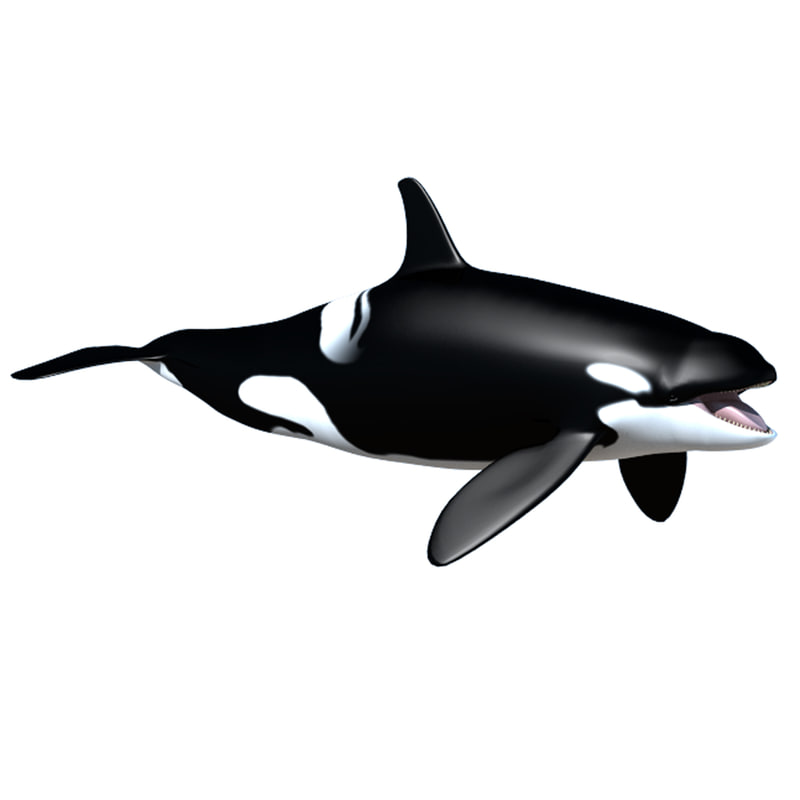 Whale texture