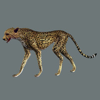 cheetah cats feline 3d model