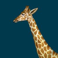 Giraffe.3ds.zip