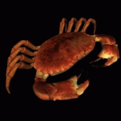 imagination crab 3d model