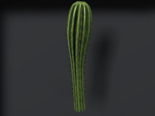 cactus render-ready 3d model