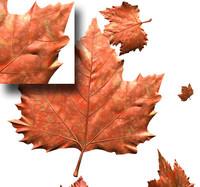 leaf.3ds