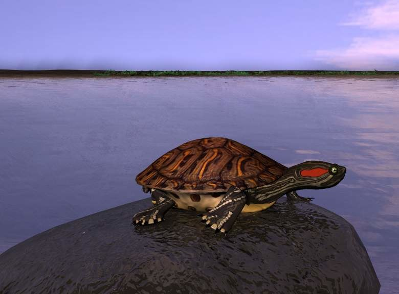 maya animalturtlereptile