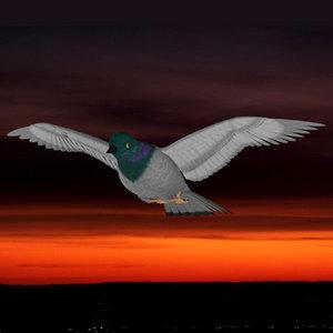 imagination pigeon 3d model