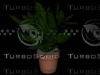 3d model hi res plant pot