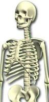 Skeleton.zip