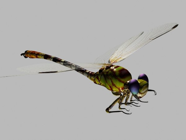 3d dragonfly animation model