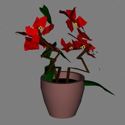 lightwave poinsettia flower