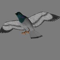 bird pigeon 3d model