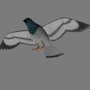bird dove pigeon w3d
