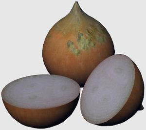 3d onion model