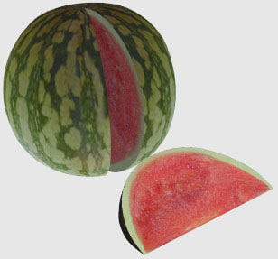 3dsmax watermelon melon