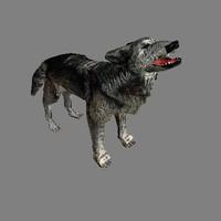 wolf dog cob