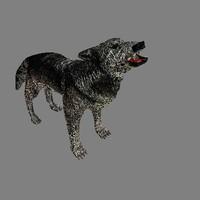 cob wolf dog