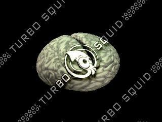 3d brain frame model
