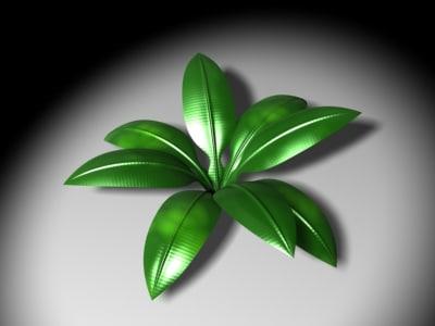 maya plant leaves