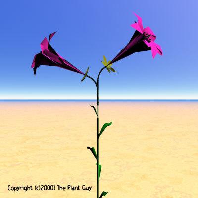 pink pitcher flower plant lwo