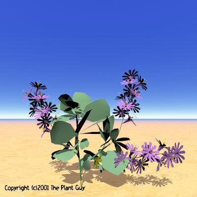 3d model royal piper flower plant