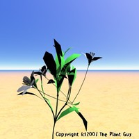 white whisp flower plant 3d model