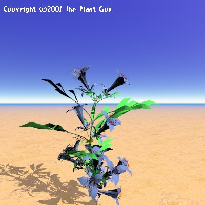 blue dragon flower plant 3d model