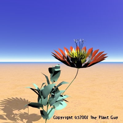 rainbow catcher flower plant 3d lwo