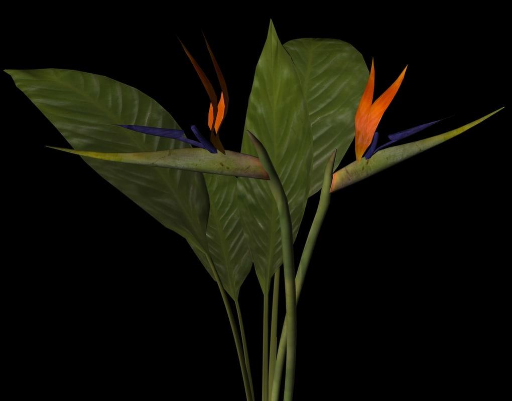 bird paradise 3d model