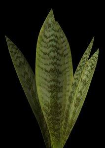 3d model plant leaf