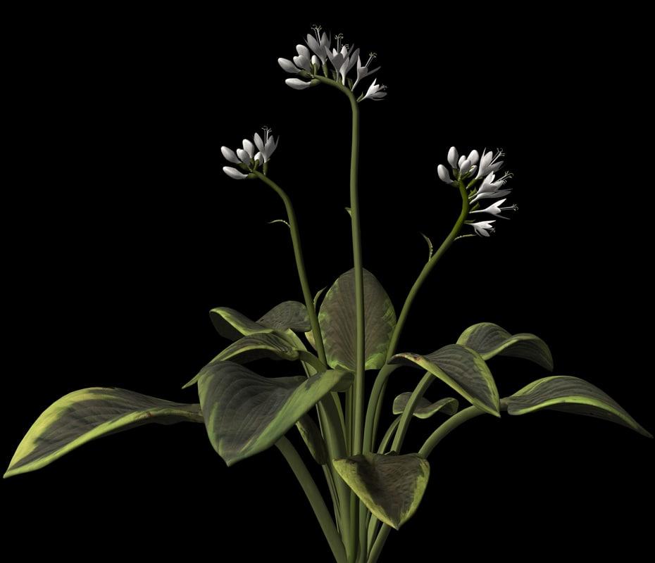 plant leaf 3d max