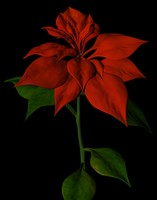 Poinsettia.max.zip