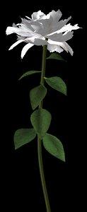 plant flower max