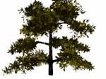lightwave cedar bryce