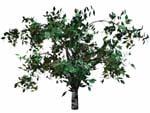 3d tree bryce