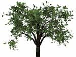 lwo tree bryce