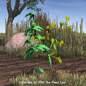 3d lwo flaming virgo flower plant