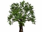 3d model of tree bryce