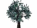 3d model tree scene bryce