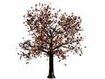 landscaping tree 3d obj