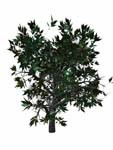 3d wild mountain bush model