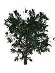 3d wild mountain bush model