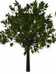 wild tree obj