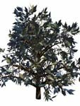3d model of wild mountain bush
