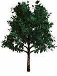 tree bryce 3d obj