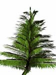 conifer bryce 3d model