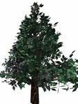 3d redwood bryce