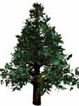 3d model redwood bryce