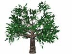 obj swamp tree