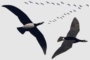 goose geese birds 3ds