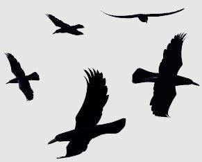 rook bird 3d model