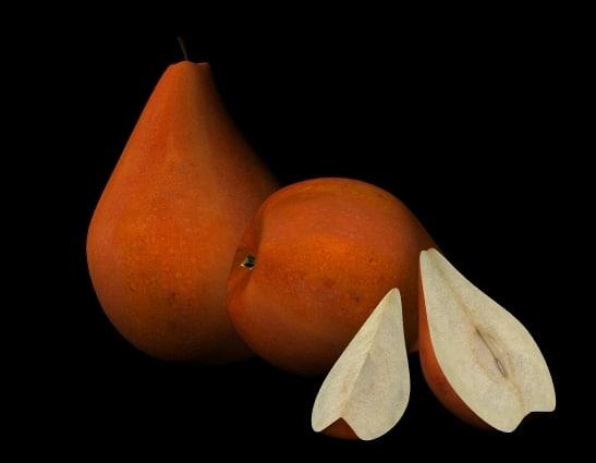 pear bosc 3d model