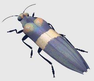 3ds jewel beetle